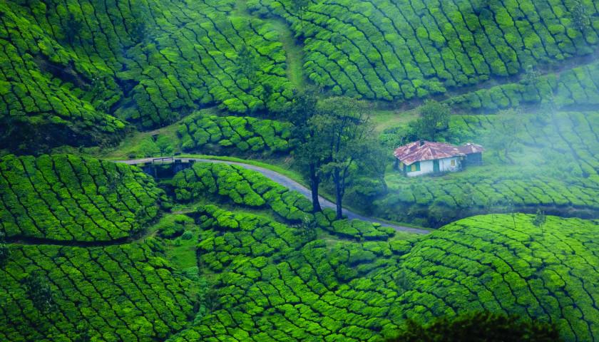 2019/10/AH-84163-Munnar-Tours-Kerala.jpg