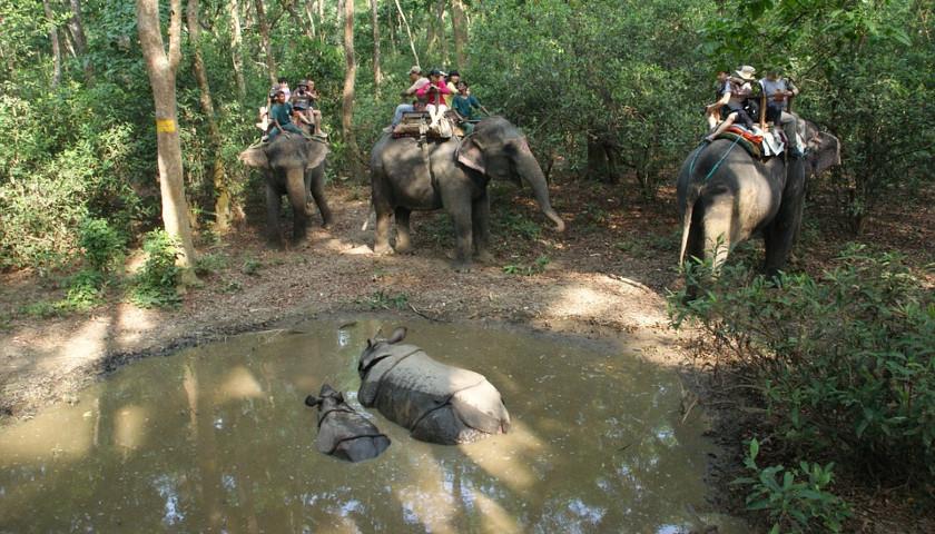 2020/01/AH-56906-Chitwan-National-Park-Nepal-003.jpg