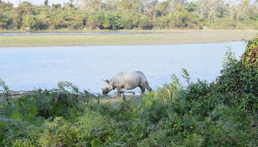 rhinoceros-india-kaziranga