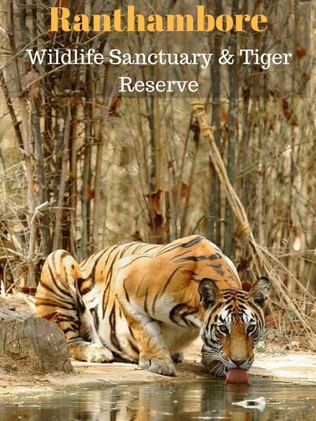 Ranthambore-tiger-tours