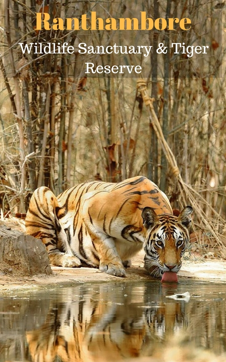 India-Wildlife-Tour-Packages